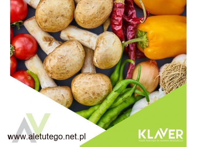 Sortowanie owoców i warzyw bez doświadczenia praca w Holandii- Westland!!!
